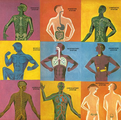 the human body  vocabulary and