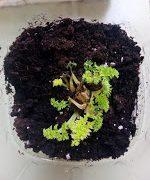 Así van nuestras plantas